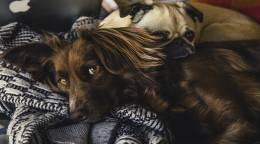 犬が人懐こい理由は発達障害にあり?