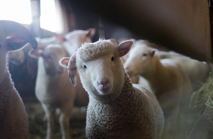 動物実験の報告に関するガイドラインの遵守:ケーススタディ