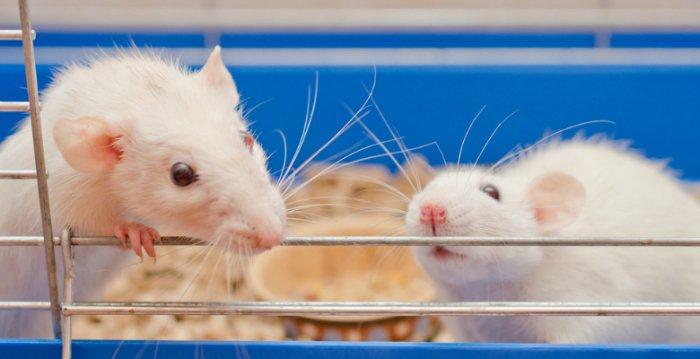 動物実験を擁護する書簡に、ノーベル賞受賞者を含む研究者数百人