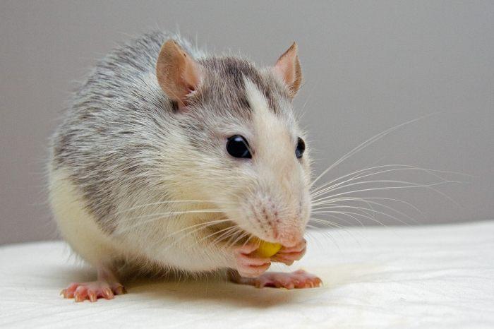 科学団体とノーベル賞受賞者、欧州での動物実験を擁護