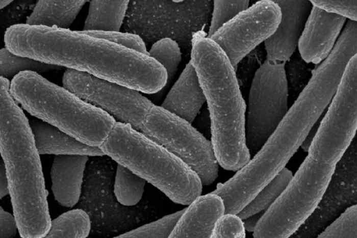 世界初、生きた細胞のDNAに動画を保存_old