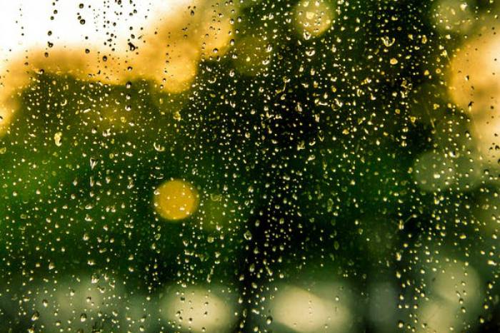 自ら雨を作り出すアマゾンの木々